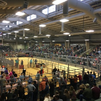Nueces County Junior Livestock Show 2017