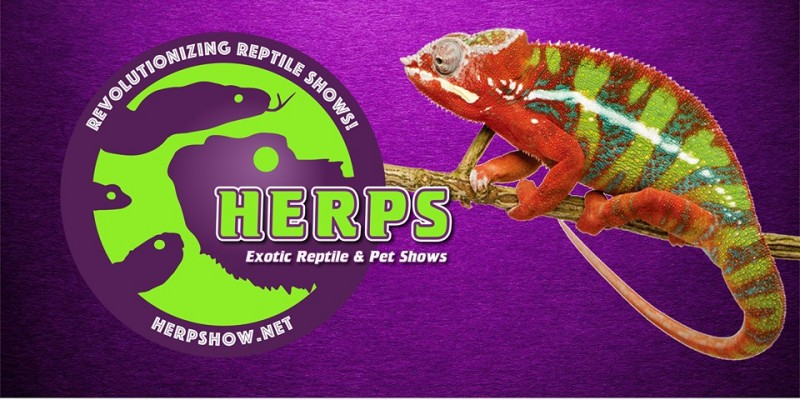 H.E.R.P.S. Exotic Reptile and Pet Shows, purple background, with reptile on left side